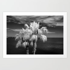 Palm Trees at Laguna Beach near LA in Southern California in Black and White Infrared Art Print