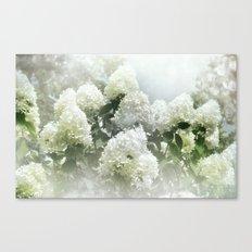 White Lilac Tree Canvas Print