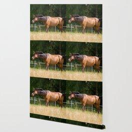 Royal class of horses, an Arabian thoroughbred Wallpaper