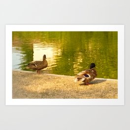 Ducks by the water Art Print
