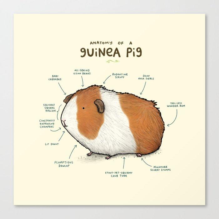 Anatomy of a Guinea Pig Leinwanddruck