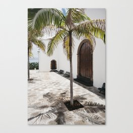 Palm tree growing in the street. La Palma, Canary Island. Canvas Print
