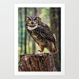 Majestic Owl Stare Art Print