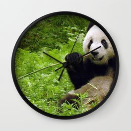 Exotic Super Dainty Grown Panda Bear Chewing On Bamboo Twig In Jungle Close Up Ultra High Res Wall Clock