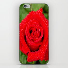 Veterans' Honor Rose iPhone Skin