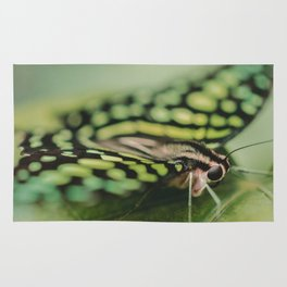 Dotted Insect Rug