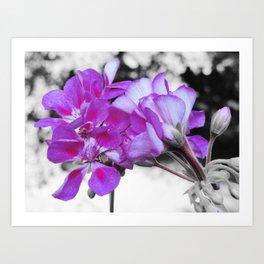 fuchsia flOWERS Pop of Color Art Print
