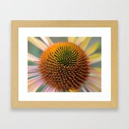 #406 Echinacea angustifolia  house  bitterroot mt macro  Framed Art Print