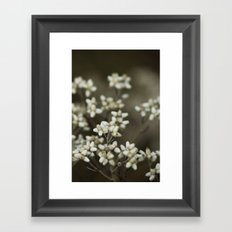 little white flowers. Framed Art Print