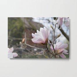 Pink Floral Blossom, Spring Time Flowers Metal Print