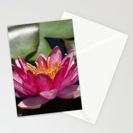Longwood Gardens - Spring Series 288 Stationery Cards