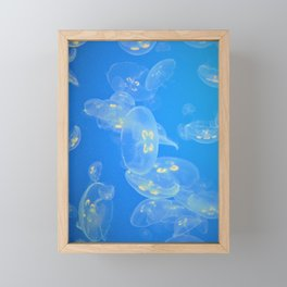 Jellies Jellyfish by Reay of Light Photography Framed Mini Art Print