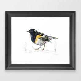 Hihi, New Zealand native Stitchbird Framed Art Print