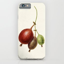 Gooseberries (Ribes) (1891) by Frank Muller iPhone Case