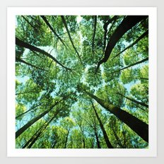 Looking up in Woods Art Print