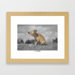 Itchy Meeko Framed Art Print