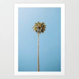 Palm Photography Art Print