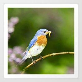 Spring Bluebird Art Print