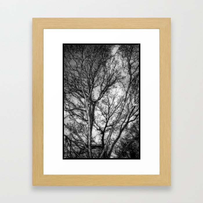 Tree Dreams Framed Art Print