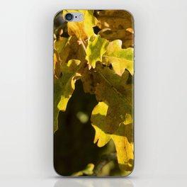 Autumnal Shades iPhone Skin