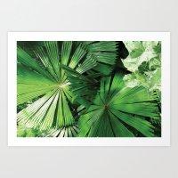 Tropical Patterns Art Print