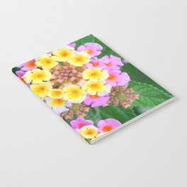 Southern blossoms Notebook