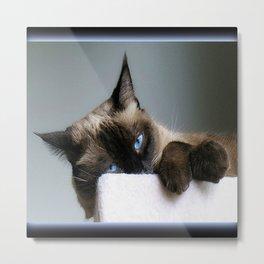 Blue Eyed Cat Metal Print