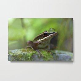 Macro photograph of a common greenback frog taken in Malaysia Metal Print