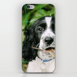 Puppy play iPhone Skin