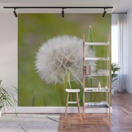 Watercolor Seed, Wild Salsify 01, Boulder, Colorado, 1, 2, 3, B-L-O-W ! Wall Mural