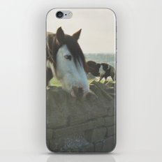 Horse in Whitby iPhone & iPod Skin