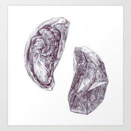 Inside a Mussel Art Print