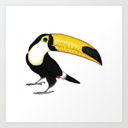 Ripley the Toucan Art Print