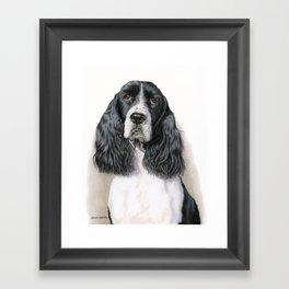 The Springer Spaniel Framed Art Print