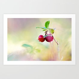 Macro shot of cowberry in forest Art Print