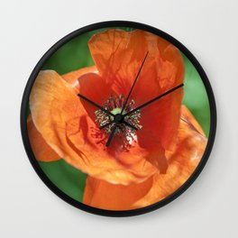 Red poppy flower Wall Clock