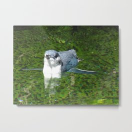 Little Blue Penguin Green Water Metal Print