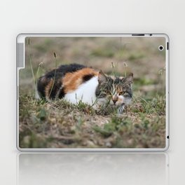 Multicolor cat is playing hide and seek Laptop & iPad Skin
