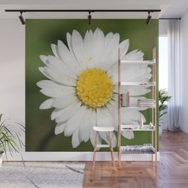 Closeup of a Beautiful Yellow and Wild White Daisy flower Wall Mural