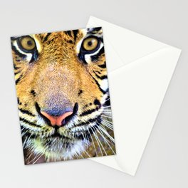 Tiger Magnetism by Reay of Light Stationery Cards