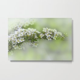 soft and dreamy -1- Metal Print