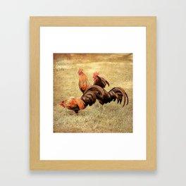 Coq Framed Art Print