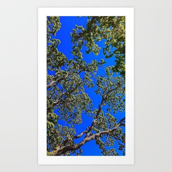 Oak, Mythological Tree Of Life Art Print