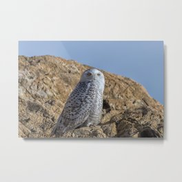 Snowy Owl with a strange look Metal Print