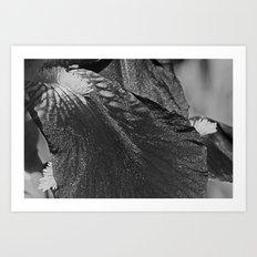 iris petal Art Print