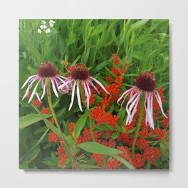 Coneflowers and Butterfly weed 7605 Metal Print