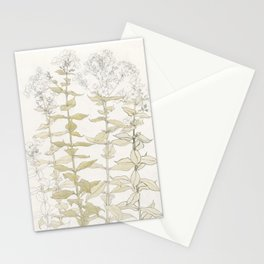 Botanical Phlox Stationery Cards