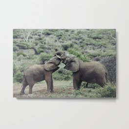 Elephants Bonding Metal Print