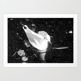 White bird Art Print