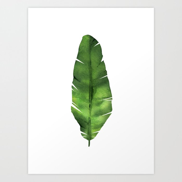 Discover the motif BANANA LEAF. WATERCOLOR ILLUSTRATION. by Art by ASolo as a print at TOPPOSTER